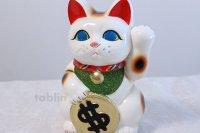 Japanese Lucky Cat Tokoname ware YT Porcelain Maneki Neko dollar white H25cm