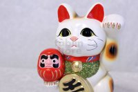 Japanese Lucky Cat Tokoname ware YT Maneki Neko Daruma left hand H19cm